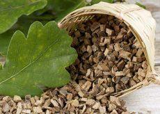 Лечебные свойства коры дуба при поносе