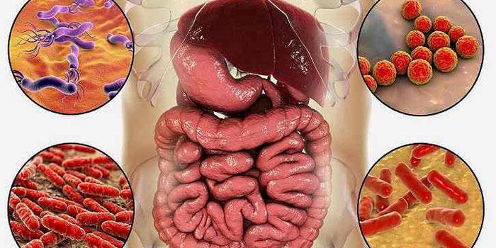 баланс кишечной микрофлоры