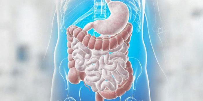 активность желудка и кишечника