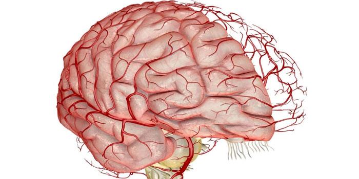 кровоциркуляция в мозге