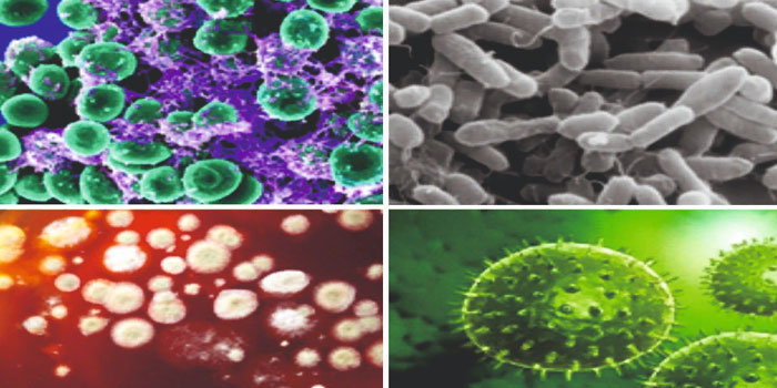 бактериальные возбудители