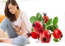Лечебные свойства шиповника при диарее