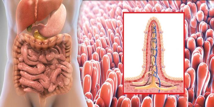 Нарушение всасывание кишечника